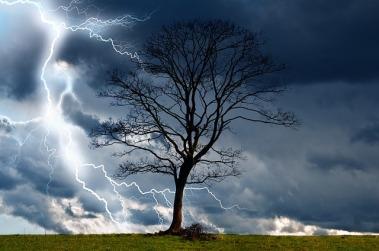 tree-164025_640