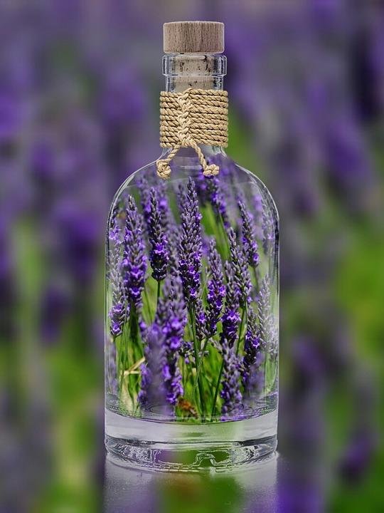 lavender-1490788_960_720